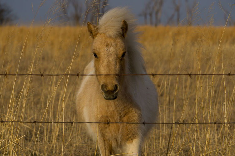 Look at me Field Grazing Hanging Out Horse Livestock One Animal Pony Standing Taking Photos