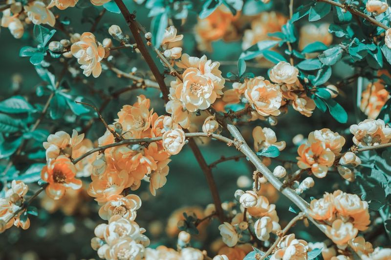 Spring Into Spring Eye Em Nature Lover Nature_perfection Nature Collection Nature EyeEm Best Shots Nature_collection EyeEm Nature Lover Beautiful Nature Nature Photography