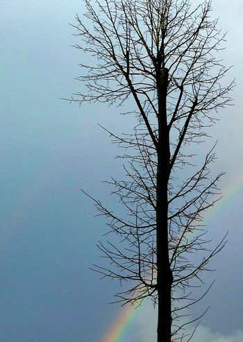Rainbow Behind A Tree Trees Rainbows Sun Sunny Day Sunny Day Sunny Afternoon Blue Sky Blue Sky Clear Clear Sky Taking Photos Taking Pictures Taking Photo Taking Pics