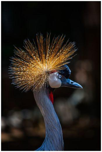 bird Bird Arts