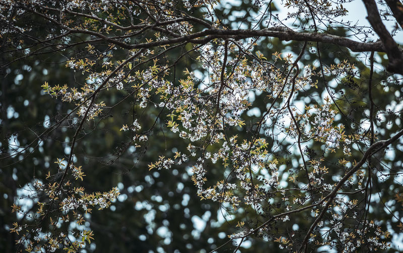 Butterfly forest Tree Plant Branch Growth Low Angle View Beauty In Nature Nature No People Tranquility Day Focus On Foreground Outdoors Close-up Sunlight Selective Focus Land White Color Sky Flowering Plant Tree Canopy