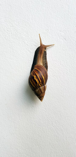 Spiral snail is