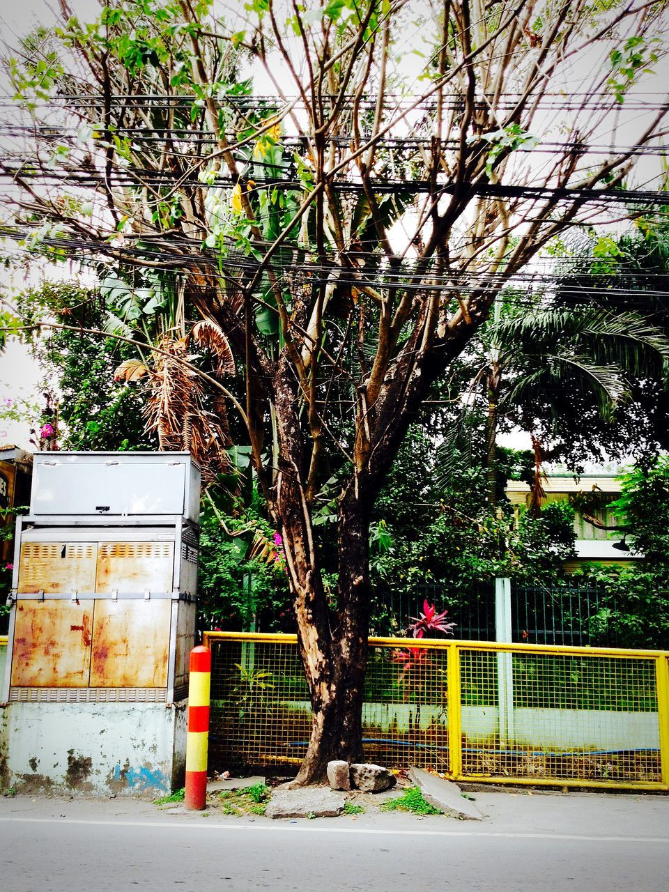 tree, no people, outdoors, day, built structure, architecture, building exterior, nature