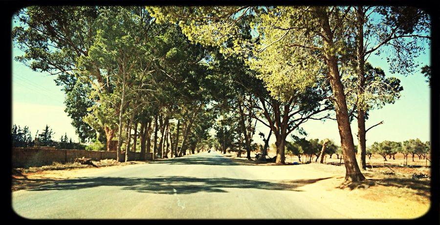 EyeEm Nature Lover Nice View Trees Traveling Taking Photos Cyrenaica Libya Follow4follow Check This Out Enjoying Life 👍🌲🌳