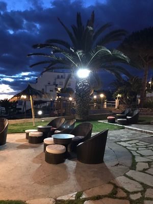 Palm Tree Outdoors Tree Night Coktail Sitges Barcelona España