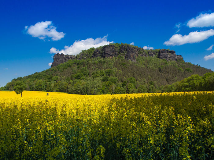 Der Lilienstein in der Sächsischen Schweiz Hiking National Park Nationalpark Sächsische Schweiz Rapeseed Field Agriculture Beauty In Nature Field Flower Flowering Plant Landscape Landscapes Lilienstein Mountain Nature No People Oilseed Rape Outdoors Sandstone Rocks Saxon Switzerland Saxony Scenics - Nature Sky Tranquil Scene Tranquility Vacation