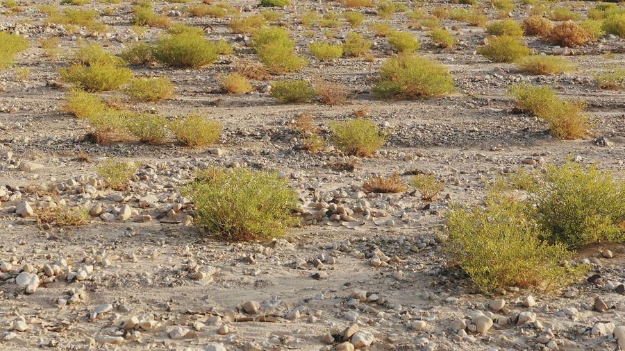 Desert Full Frame Backgrounds No People Day Nature Growth Plant Textured  Land Outdoors Beauty In Nature Pattern Sunlight Close-up Solid Rock Tranquility