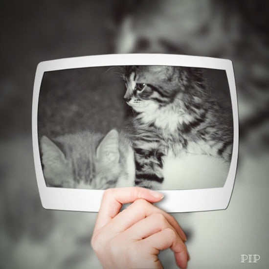 Kitten Love Cat Black & White Domestic Animals Pets Dog One Animal Photography Themes Animal Animal Hair Human Hand Animal Themes One Person People Mammal One Man Only Only Men Adult Outdoors Vet  Day