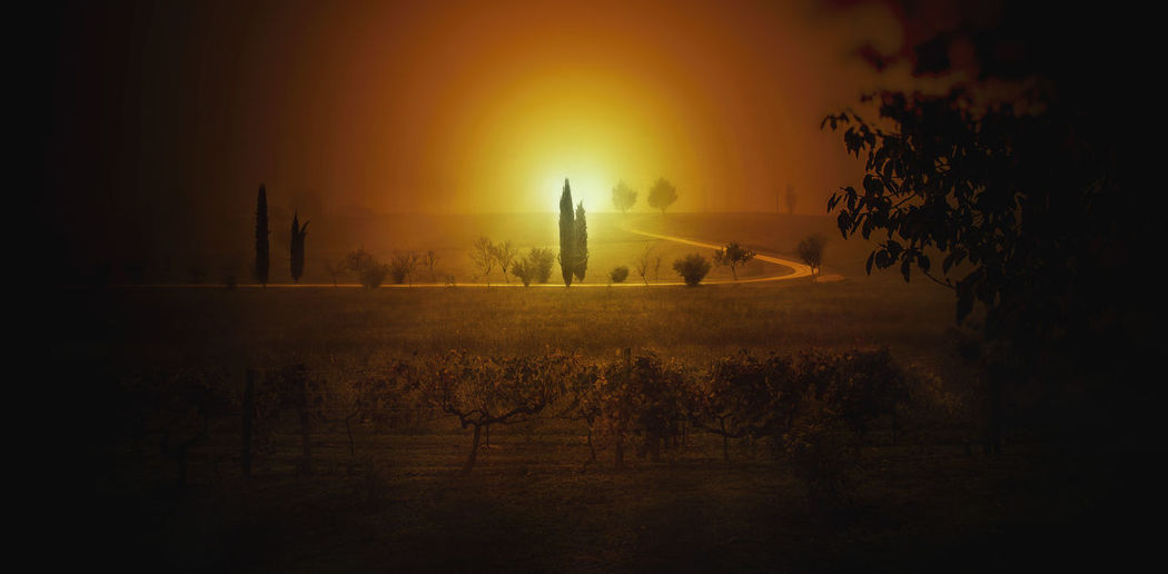 Tree Architecture Sky Plant Built Structure Fog Building Exterior Nature Sunset No People Building Landscape Sun Tranquility Outdoors Tranquil Scene Religion Silhouette Beauty In Nature Textured Effect