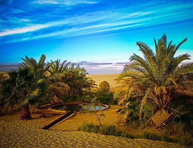 Egypt Siwa Oasis Oasis Desert Palms Tourism