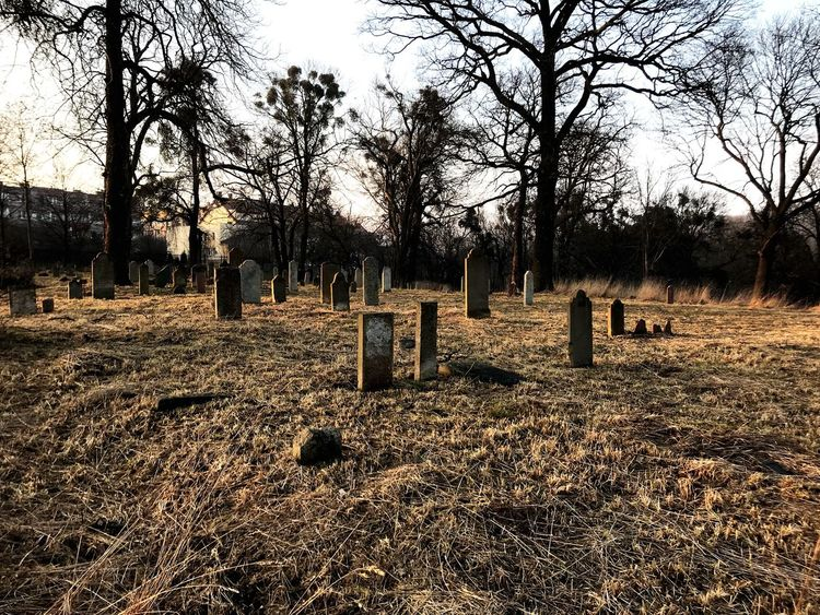 darkness and light Poland Is Beautiful Poland Jewish Cemetery No People Cemetery_shots Cemetery Cemetery Photography Ghost Eye4photography  EyeEmNewHere #cemetery Tombstone Cemetery Memorial Graveyard Gravestone Grave The Past Tree Nature Day Mammal Outdoors Tranquility Bare Tree