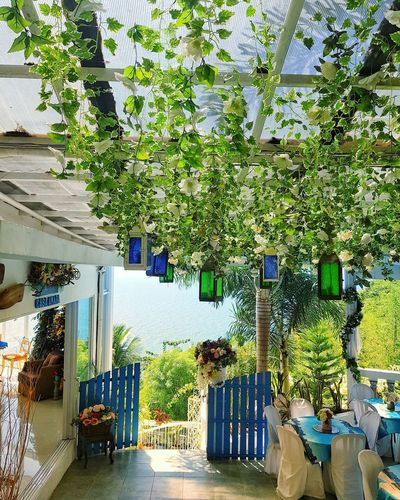 Potted plants hanging by building