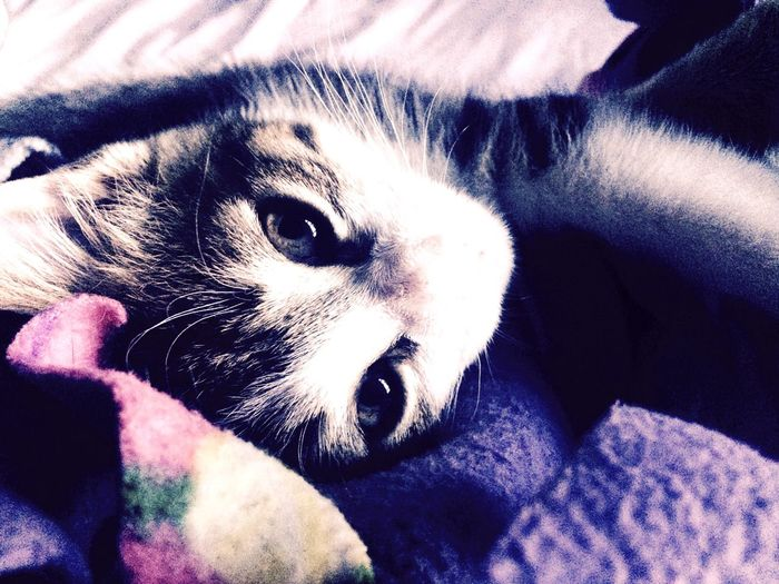 Lovely in lavender Cute Animals Cat Kitten