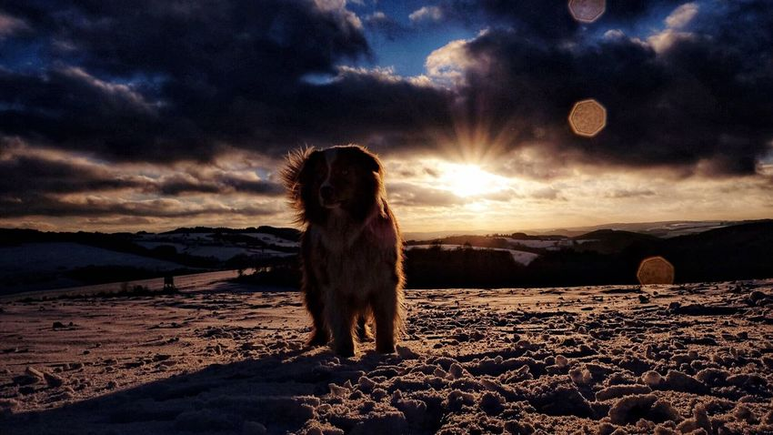 Domestic Animals Sky One Animal Sunset Pets Animal Themes Dog Cloud - Sky Nature Landscape Beauty In Nature No People Scenics Outdoors