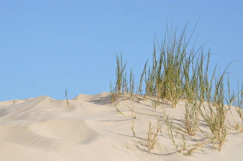 Beach Pics -