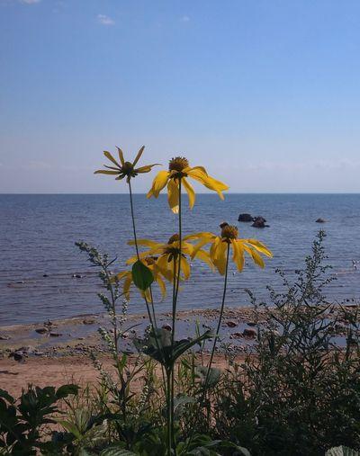 Summer, sea,