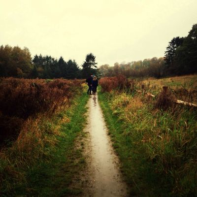 Fall in the danish countryside. A Walk In The Woods Country Road