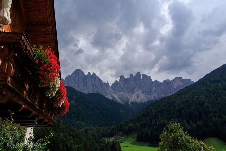 Dolomites, Italy Mountain Scenics Tranquil Scene Tranquility Mountain Range Beauty In Nature Tree Landscape Sky Nature Non-urban Scene Remote Solitude Cloud - Sky Day Growth Outdoors Red Majestic Tourism Val Di Funes Alps Dolomites, Italy Beautiful Panoramic