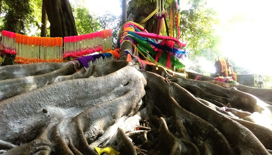Tree Beliefs Belief In Thailand Sacred Tree Northeast Thailand Lucks Worship Place Spirits Of The Forest