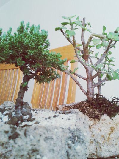 Relaxing Taking Photos That's Me Enjoying Life bonsai