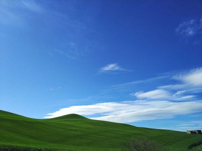 Tea Crop Rural Scene Agriculture Blue Hill Tree Field Sky Landscape Cloud - Sky