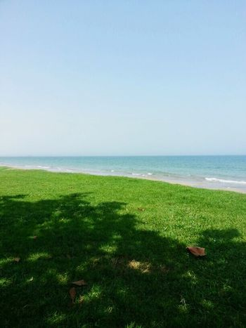 Grass At The Beach! Beauty In Nature Relaxing Vacation Time Oman Enjoying Life Breathtaking View