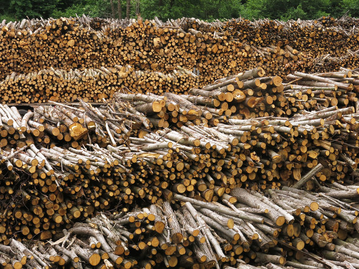 Stacked Logs On Field