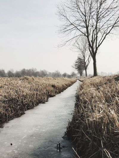 Early winter mornings in the fields Riverbank River Frozen Bare Tree Nature Tree Day Tranquility Outdoors Tranquil Scene Landscape Beauty In Nature Scenics Sky Cold Temperature Rural Scene No People