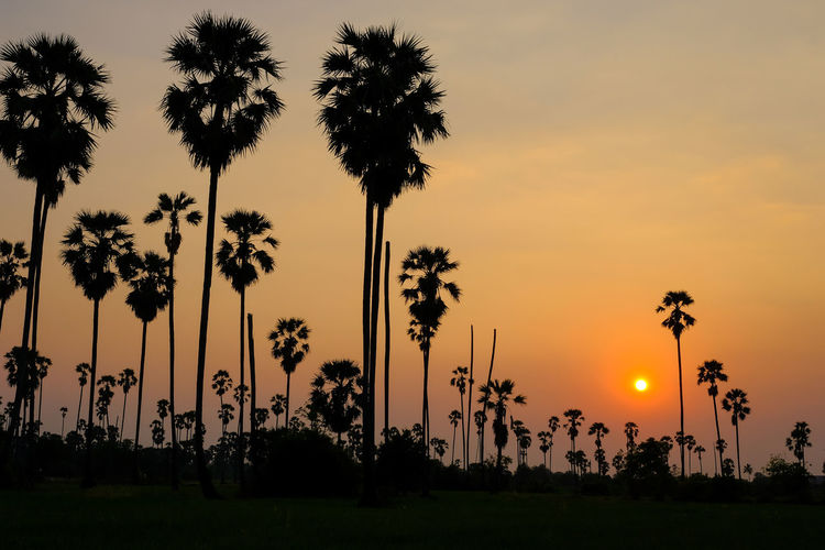 Silhouette Beauty In Nature Cloud - Sky Coconut Palm Tree Growth Idyllic Land Nature No People Orange Color Outdoors Palm Tree Plant Scenics - Nature Shadow Silhouette Sky Sun Sunset Tranquil Scene Tranquility Tree Tropical Climate