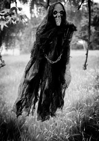 Portrait of dead tree on field