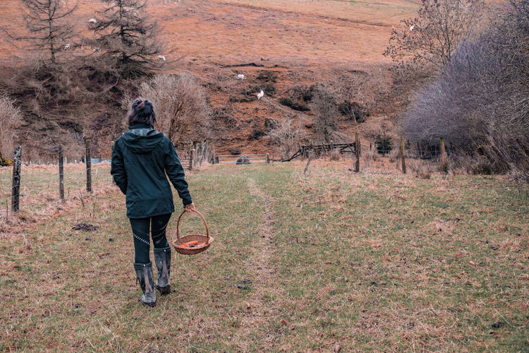walking with a basket of carrots to feed horses or donkeys Carrots Feeding Animals Wellington Boots Wellies  Boots Farmland Winter Young Woman Wales UK Working Farm Basket Girl Sheep Full Length Women Walking Farmland Cultivated Land Farmer Agricultural Field Farm Worker Farm Countryside Field