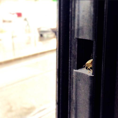 Bug Bugs