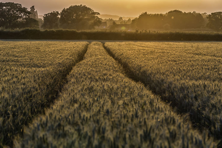 As the sun goes down over the barley Agriculture Barley Barley Field Beauty In Nature Cereal Plant Field Golden Golden Hour Growth Landscape Nature No People Outdoors Rural Scene Scenics Sky Sunset Tranquil Scene Tranquility EyEmNewHere Paint The Town Yellow