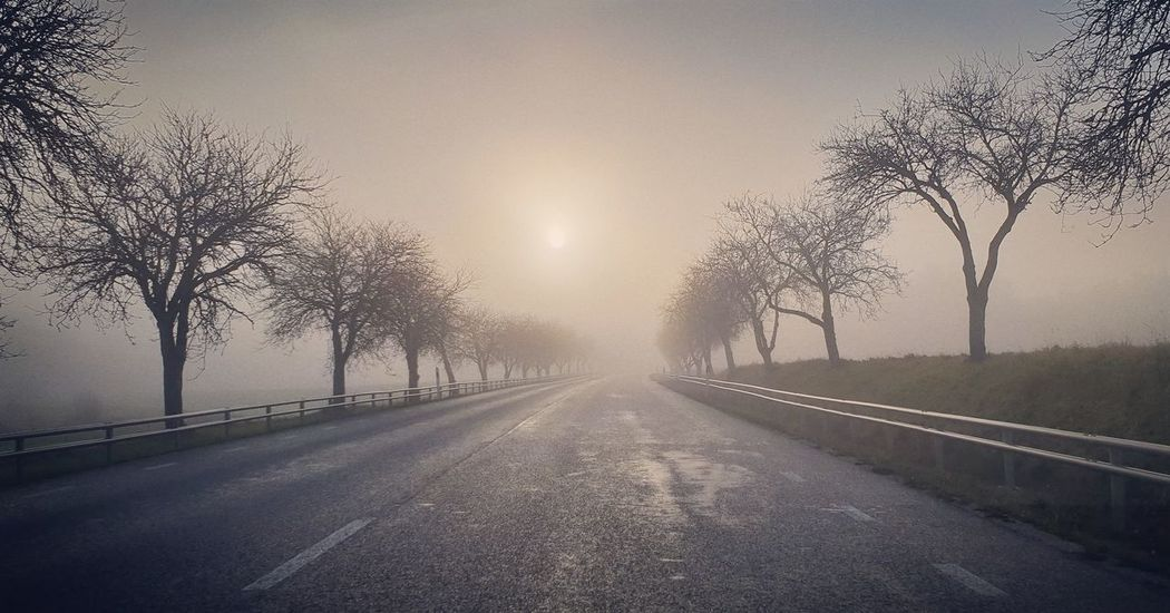 Gotland Sweden Autumn Autumn colors Tree Cold Temperature Fog Road Sky Empty Road Country Road Diminishing Perspective
