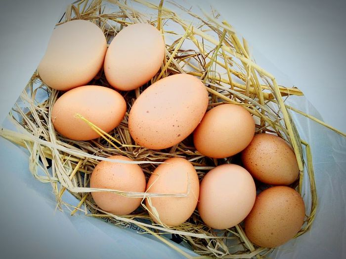 Egg Food And Drink Animal Egg Raw Food Food Fragility Organic Healthy Eating Easter Egg Carton Protein Easter Egg Agriculture Freshness Eggshell Healthy Lifestyle New Life No People Indoors  Close-up