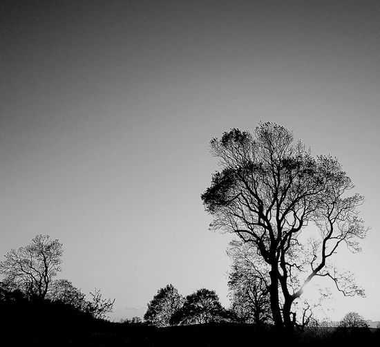 Tree line silhouette Bare Tree Beauty In Nature Black And White Branch Clear Sky Dusk Evening Landscape Lone Low Angle View Nature Outdoors Scenics Silhouette Sky Tranquil Scene Tranquility Tree Tree Trunk Treeline Treeline Silhouette
