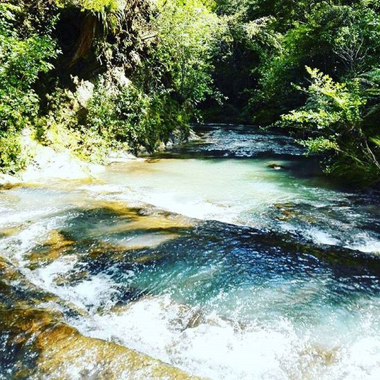 One of the many slippery river crossings. Not gonna lie, fell over in several of them. Less stream-like and more fast-flowing-river after previous nights rain. Tramping Sun Spring Outdoors Nature River Hike Newzealand Water Bushbash Kauri Forest