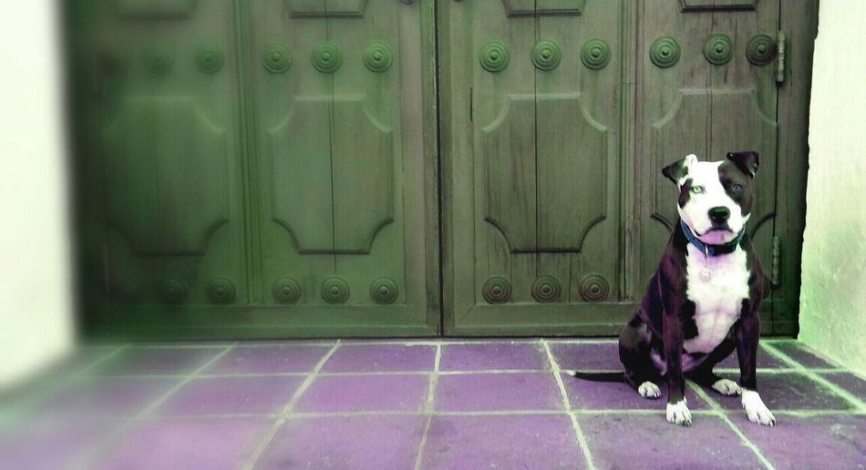 Dog in pen