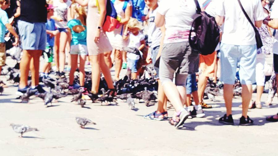 Piazza San Marco Markusplatz Everybodystreet Desks From Above Tourism People Together People Gulls Place Of Worship Places Place Place Of Interest Streetphotography Streetscape Excercising Life Capturing Movement Capture The Moment Popular Birds Animals Animals In The Wild Original Experiences People And Places Venice, Italy The Street Photographer - 2017 EyeEm Awards The Photojournalist - 2017 EyeEm Awards