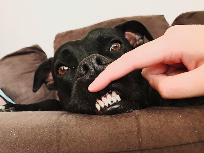 Say Cheese 🧀 Pets Dog Animal Funny