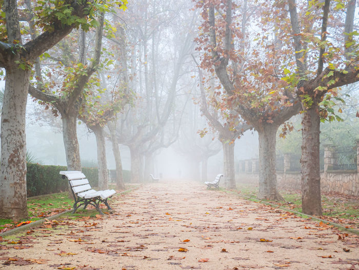 Empty park bench by trees during autumn