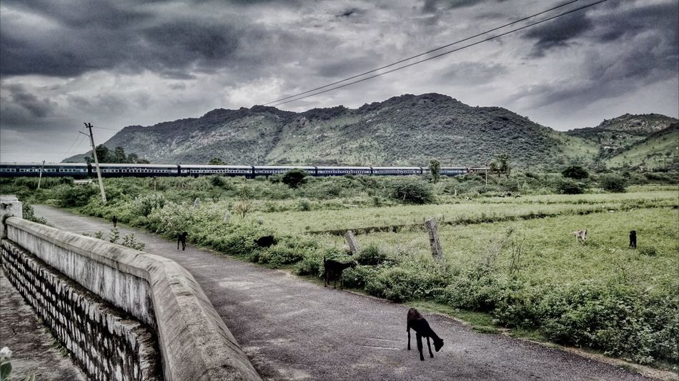 The Darkest hour ... Dark Clouds Passing Train Moto X Mobile Photography EyeEm Best Edits Tadaa Community Tamilnadu Nature_collection EyeEm Masterclass EyeEm Best Shots Mountains Train Adventure Exploring Landscape Dramatic Sky Nature Photography Goat Photooftheday EyeEm Nature Lover Mobilephotography Popular Photos South India Sky And Clouds Landscape_Collection