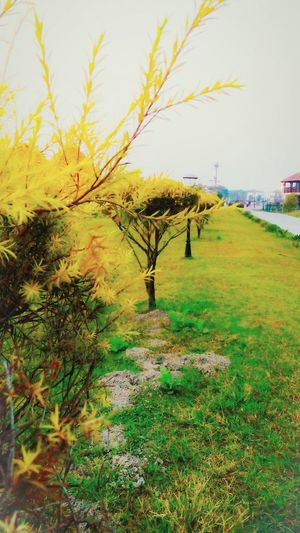 Plants Ecoturism Park Noise Highsaturation Saturated Naturally Warm Holiday Nature Dry Leaf Tree Rural Scene Field Sky Grass Grass Area