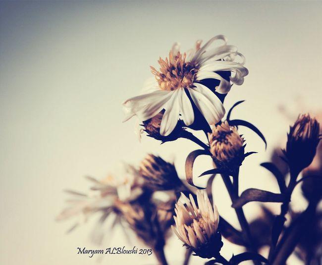 flower..♡