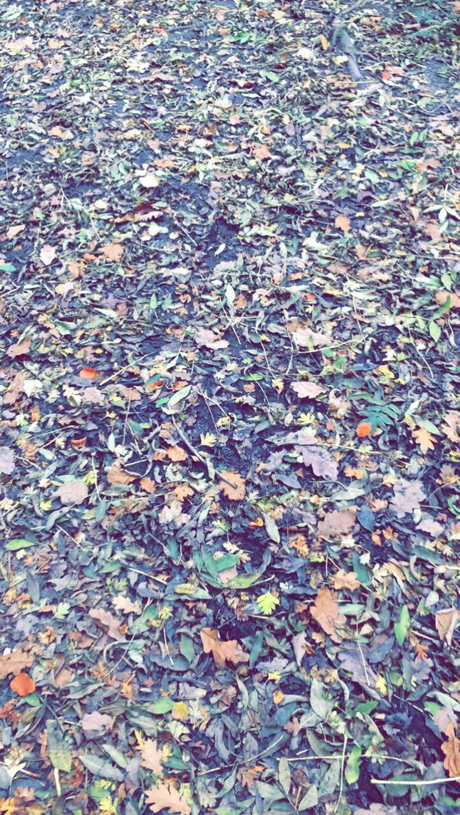 leaf, autumn, change, season, backgrounds, full frame, leaves, dry, ground, day, nature, fallen, natural condition, tranquility, abundance, outdoors, fragility, fallen leaf, tranquil scene, beauty in nature, large group of objects, scenics, many, surface level, no people, vibrant color