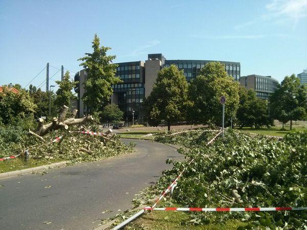bäume. niedergefegt vorm landtag. Düsseldorf Unwetter