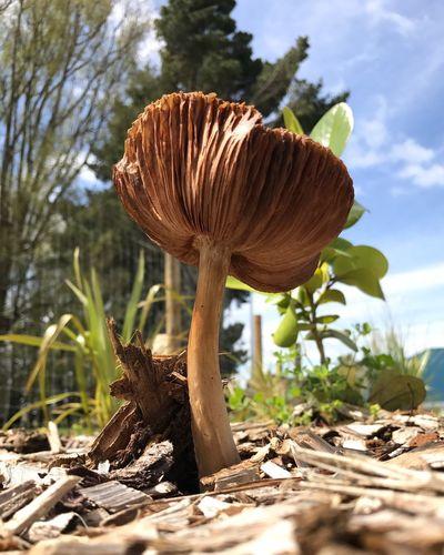 Close-up of mushroom on tree against sky
