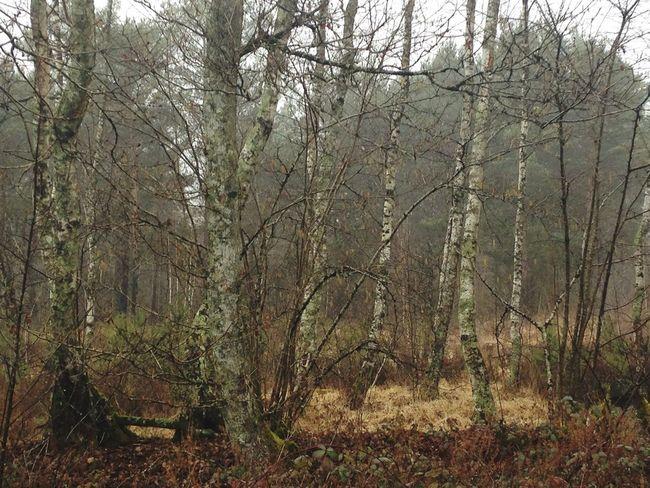 Sologne Forest Trees TreePorn EyeEm Nature Lover EyeEm Landscape