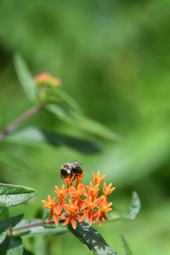 Bumblebee Sunny