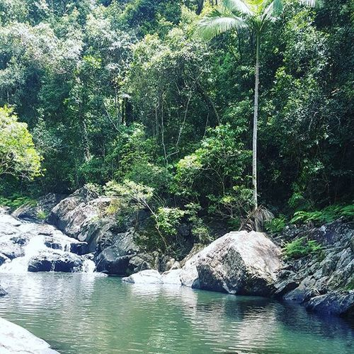 Perfection 👌 Oasis Peaceful Booloumbafalls Adventures Walks Swimming Perfection Fun Wildlife Pretty Rainforest Bush 4wding Sunshinecoast